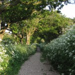 Path thru greenery and flowers