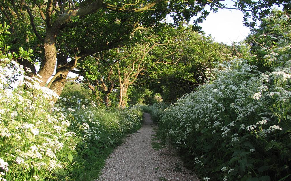 Path thru greenery and flowers